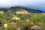 Organ Pipe National Monument